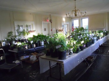 May Plant Sale & Auction